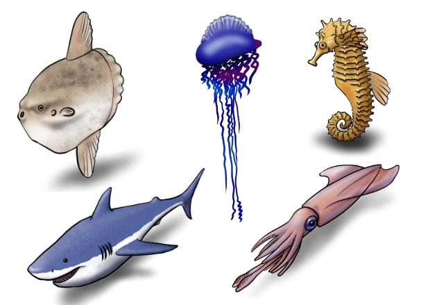 RPG用ザコ敵(水生生物)41種類セット