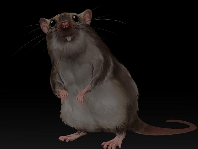 ドブネズミは人間の少女に恋をした