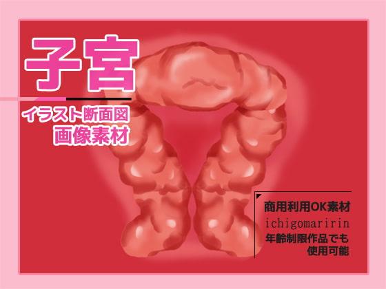 RJ322137 子宮(断面図)のイラスト画像素材~商用成人利用OKの著作権フリー [20210403]