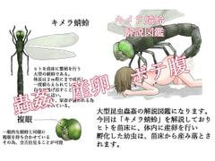 キメラ蜻蛉 解説図鑑