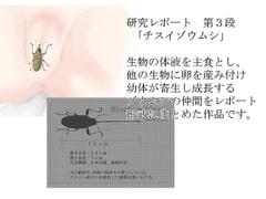 研究レポート チスイゾウムシ編