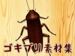 ゴキブリ素材集