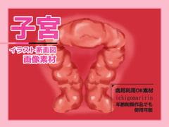 子宮(断面図)のイラスト画像素材~商用成人利用OKの著作権フリー